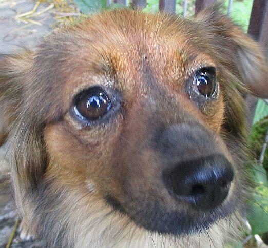 Gmina Pułtusk dzięki wolontariatowi na rzecz adopcji nie musi odsyłać bezdomnych zwierząt do schroniska