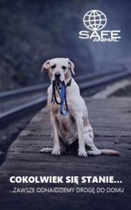 plakat czipowanie psów